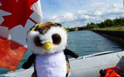 Owliver's Adventures Begin!