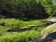 Better than ornamental pond