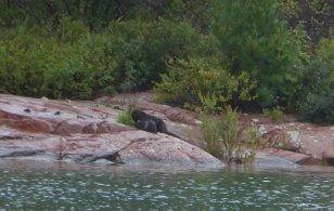 Otter family grooming