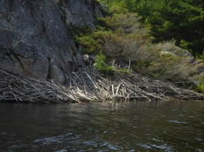 and large beaver dam - Back of Beardrop