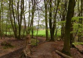 Uit het bos naar de open ruimte, met - een stip - de wichelroedeloper (Foto: Ad Lansink)