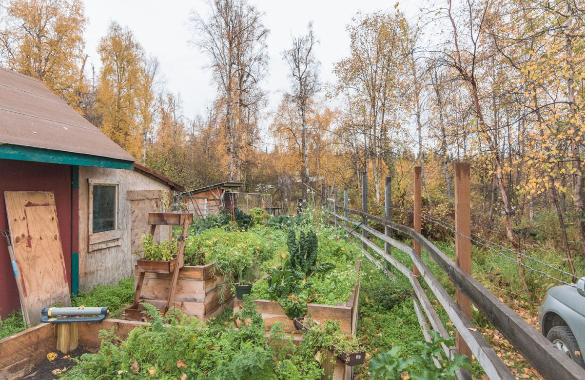 You Can Win An Interior Alaska Hobby Farm With An Essay