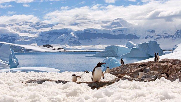 """Antarktika buzullarının altında keşfedilen ilginç canlı, """"aslında orada olmaması gereken"""" bir canlı türü olarak tarihe geçti."""