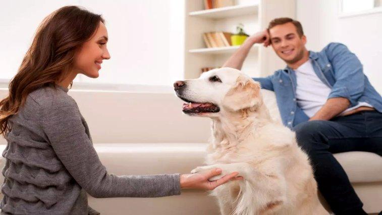 Viyana Üniversitesi'nde bulunan bir araştırma ekibi tarafından yayınlanan bir çalışmada, köpeklerin insanların onlara yalan söyleyebildiğini anlayabildiği bulundu.