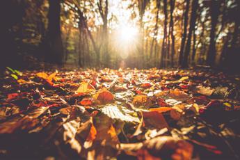 Uno scudo contro la 'tristezza da autunno'