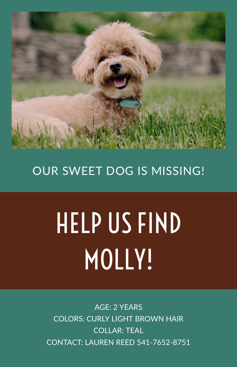 missing pet poster templates adobe spark