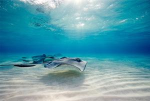 Create Ocean's Freshness in Photoshop CS3