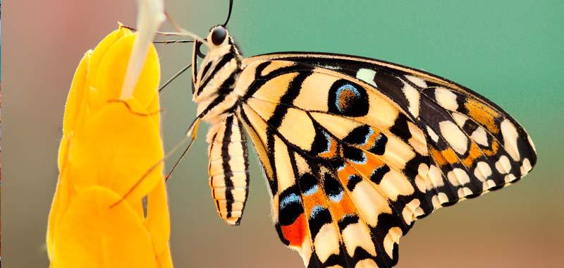 jardin mariposas costa rica