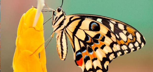 El jardín de las mariposas de Costa Rica