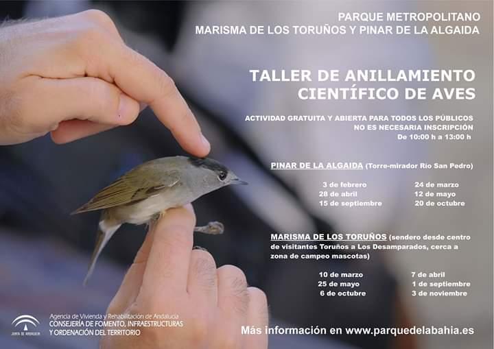 """TALLER DE ANILLAMIENTO CIENTÍFICO DE AVES """"Parque Metropolitano Marisma de Los Toruños y Pinar de la Algaida"""" (CÁDIZ) AÑO 2019 adondevoyconmifamilia"""