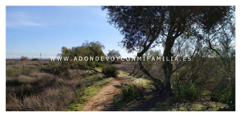 sendero pinar de la algaida Adondevoyconmifamilia 19