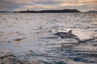 2017-18, Animals, Dolphin, Dolphins, Leg Zero, Nature, On board, On-board, Pre-race, Rolex Fastnet Race, Sunset, Vestas 11th Hour Racing, Wildlife