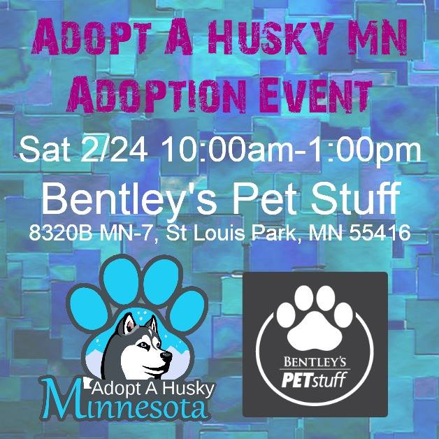 Adopt A Husky Minnesota Adoption Event at Bentley's Pet Stuff in St. Louis Park