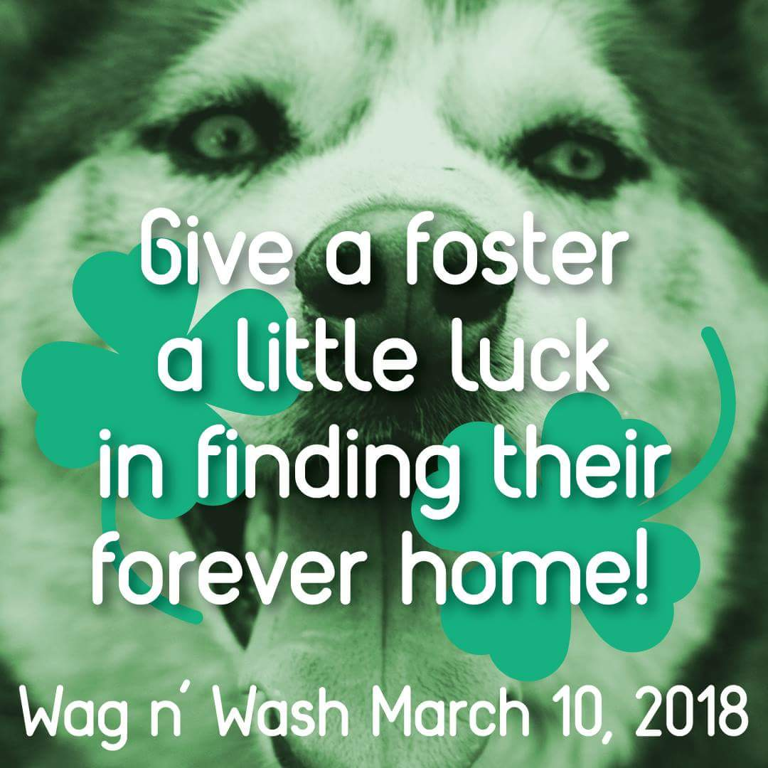 Wag n Wash March 10th 2018