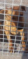 Cane adulto METICCIO femmina di taglia media in adozione centronord – Priscilla così felice x le coccole Sud di 6anni