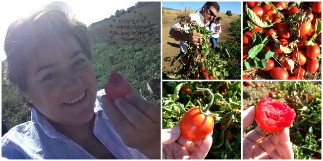 Campbells Tomatoes #TASTE14