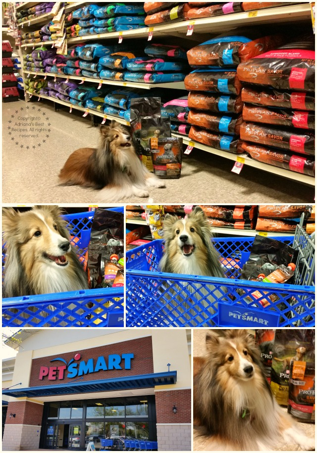 Bella shopping for Purina Pro Plan at PetSmart #ProPlanPet #ad