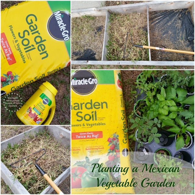 Planting a Mexican Vegetable Garden #MiJardinalidad #ad