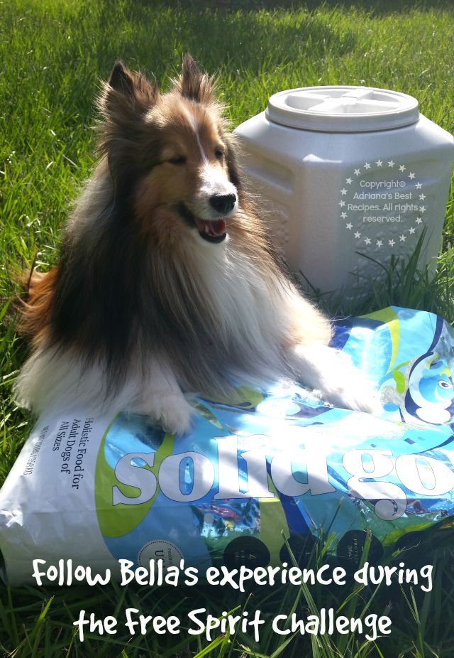 Follow Bellas experience during the Free Spirit Challenge #SolidGoldPets #ad