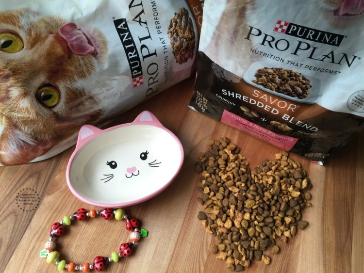 Pampering my kitty with Purina® Pro Plan® Savor® Shredded Blend