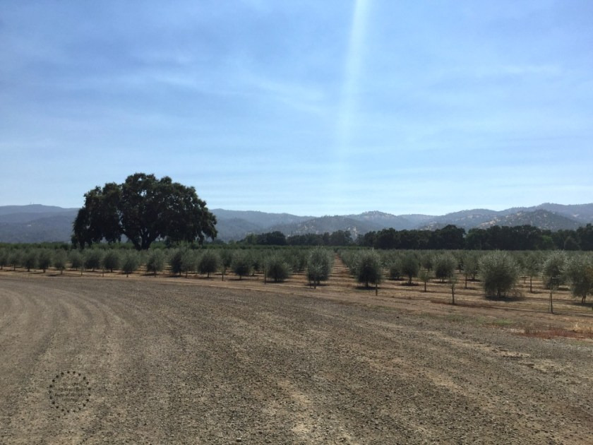 Capay Valley Ranches a beautiful place few minutes from Esparto, California
