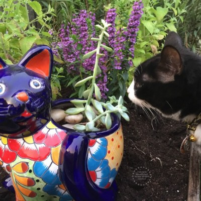 Sembrando un Jardin para Gatos