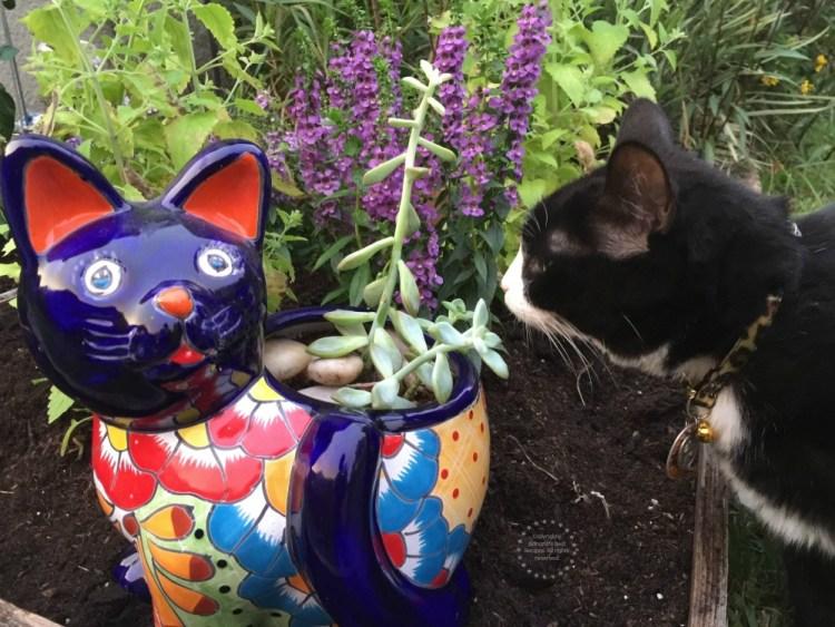 Tatiana checando el nuevo jardin para gatos