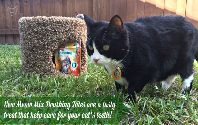 New Meow Mix Brushing Bites are a tasty treat that help care for your cats teeth