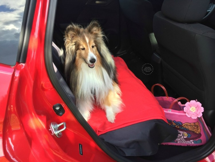 Use the back seat and a protecting cover to safely transport your dog in the car