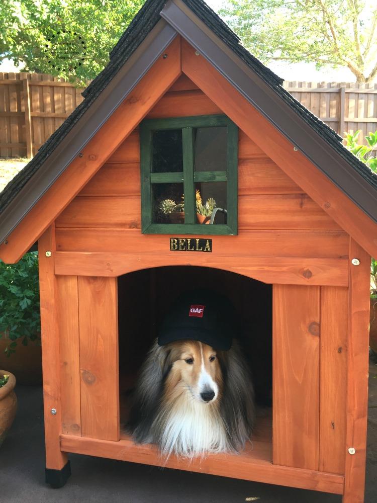 Bella disfrutando de su nueva casita