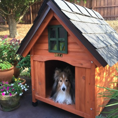 Best Dog House Do It Yourself Project