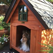 Same as we craft the best recipes, we also built the best dog house for the most pampered of the family: Bella, our sheltie dog, and kitchen companion. When planning for this DIY project, we took into consideration the best dog house would have to be resistant to the Florida weather, comfortable, and serve as a decorative fixture adding personality to our backyard.