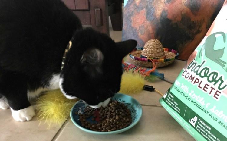Tatiana enjoying her new food and the indoor cat playhouse