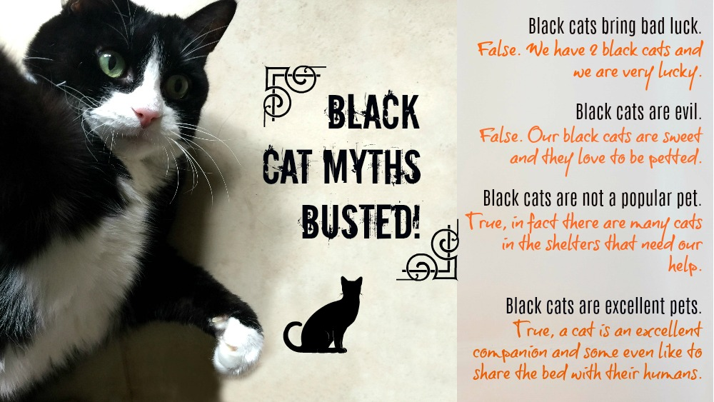 Black Cat Myths Busted