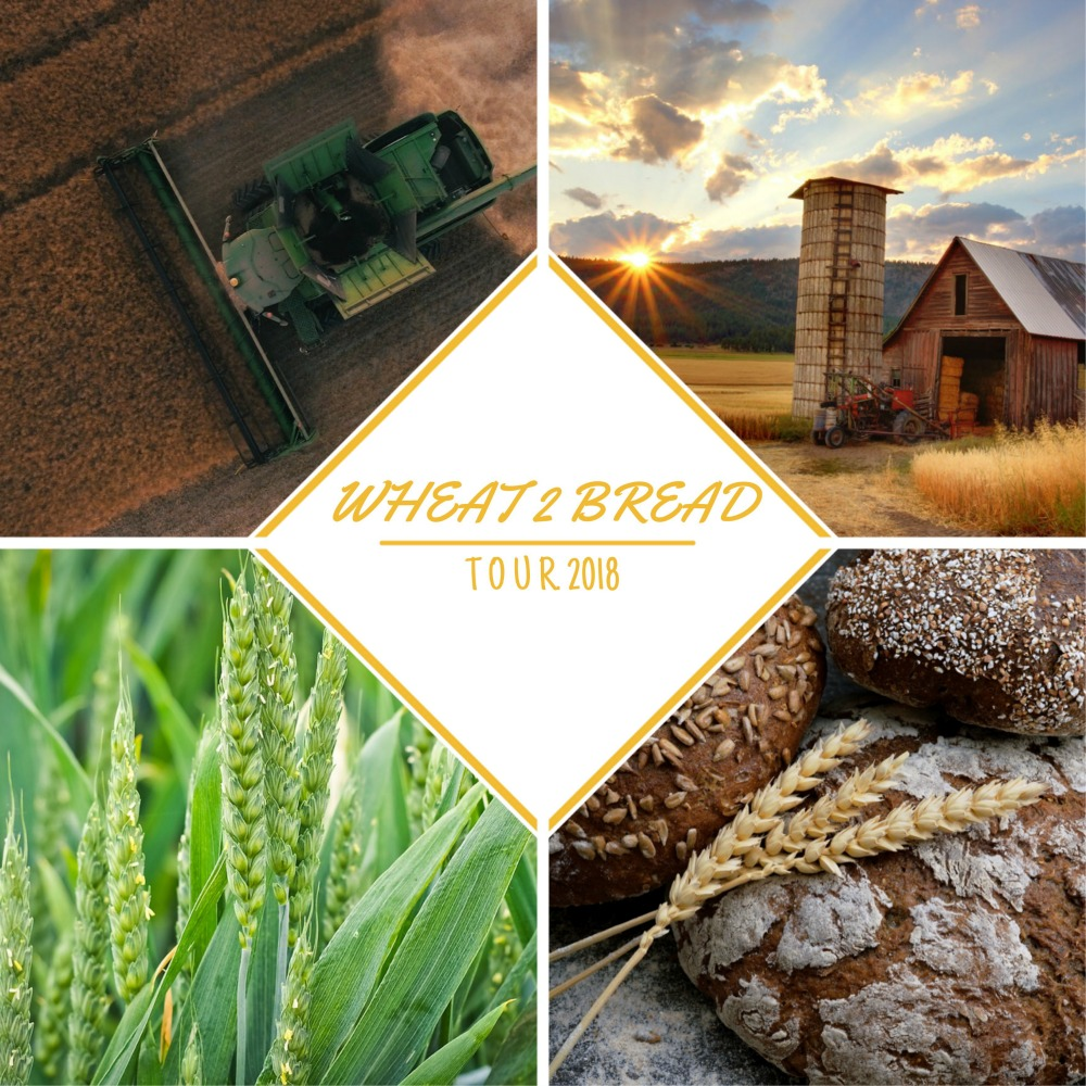 Wheat 2 Bread Tour la cosecha del trigo