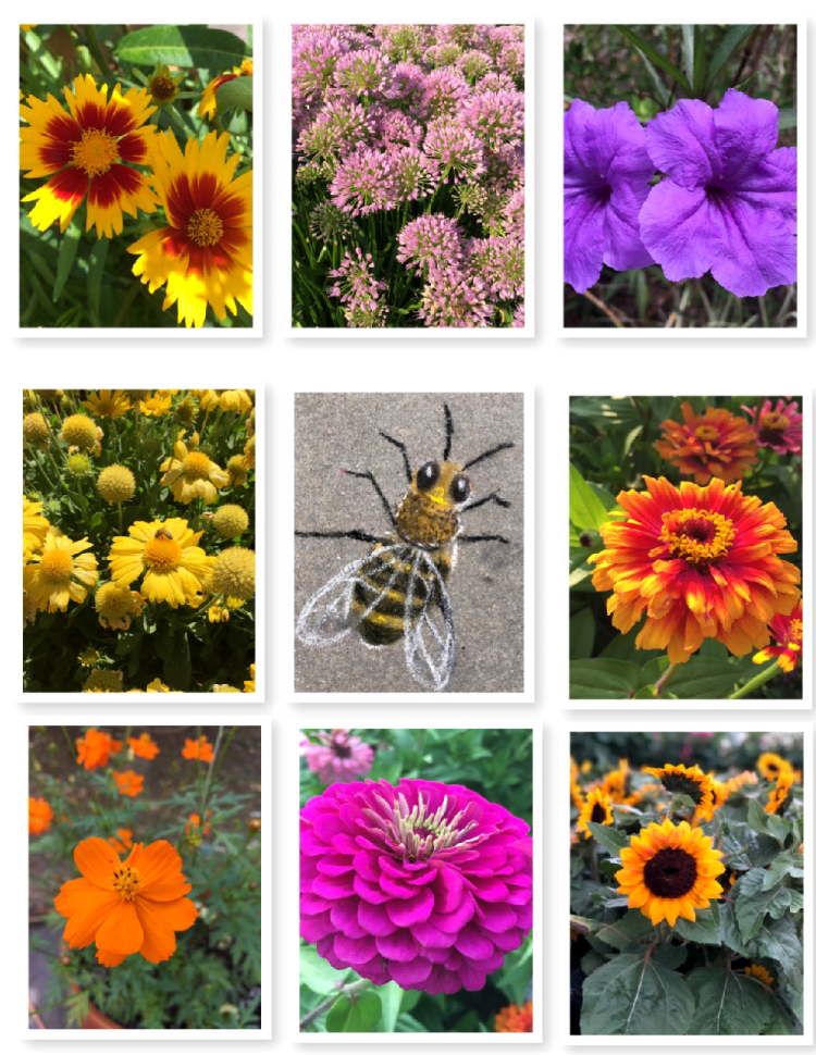 Yellow, orange, purple and blue are the flowers that bees love
