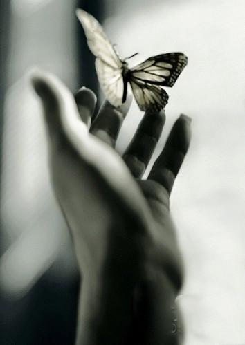 fluturi