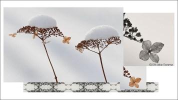 Winter's Duet