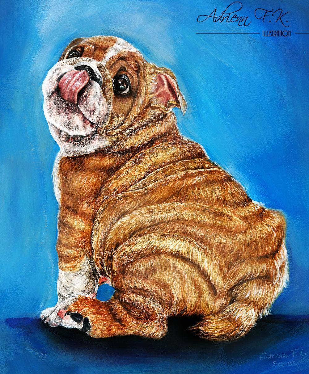 Bulldog///Farbstift // /Reference: Warren Photographic