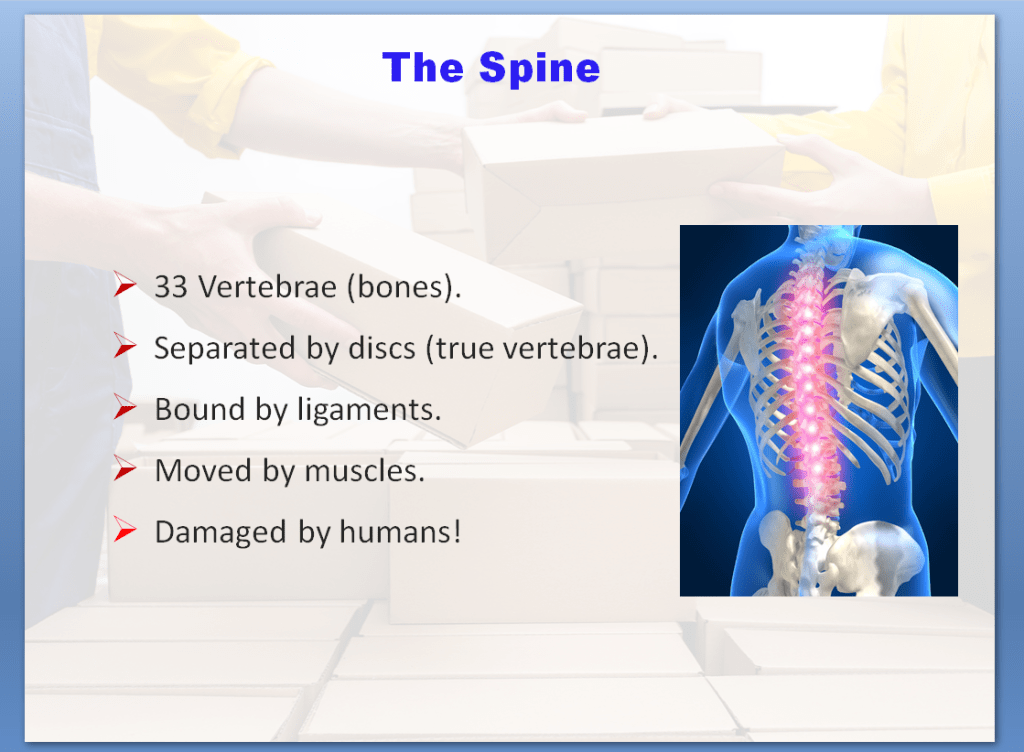 Manual Handling Awareness Training Course | The Spine