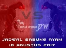 jadwal sabung ayam 18 Agustus 2017