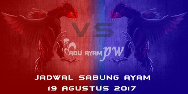 jadwal sabung ayam 19 Agustus 2017