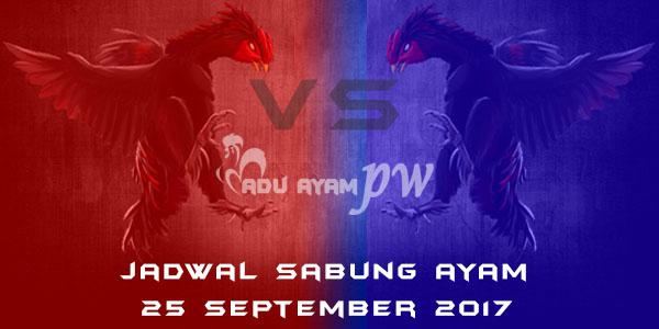 jadwal sabung ayam 25 September 2017