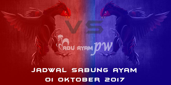 jadwal sabung ayam 01 Oktober 2017