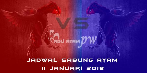 jadwal sabung ayam 11 Januari 2018