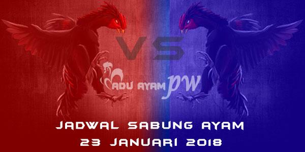 jadwal sabung ayam 23 Januari 2018