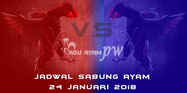 jadwal sabung ayam 24 Januari 2018