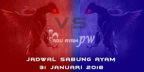 jadwal sabung ayam 31 Januari 2018