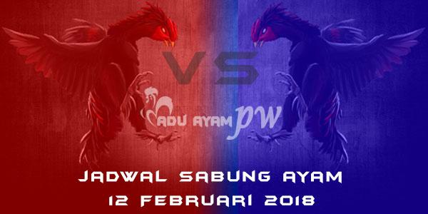 jadwal sabung ayam 12 Februari 2018