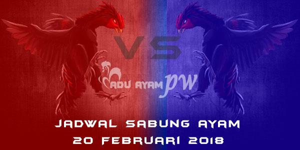 jadwal sabung ayam 20 Februari 2018